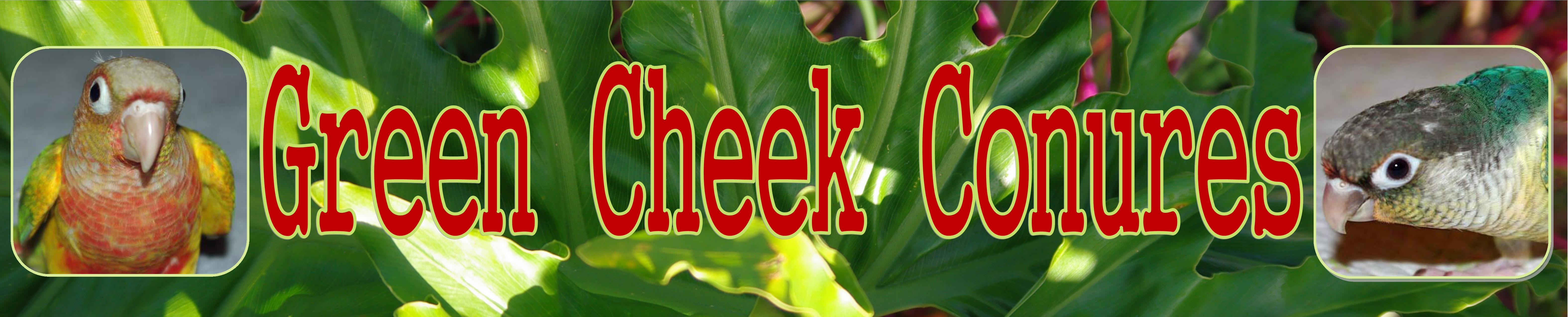 GREEN CHEEKS